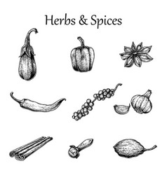 herbs and spices hand drawing vintage style vector image vector image