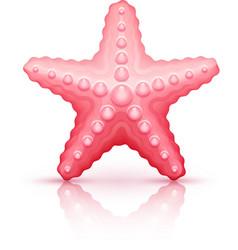 Starfish sea star isolated vector image