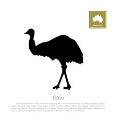 black silhouette of ostrich on white background vector image