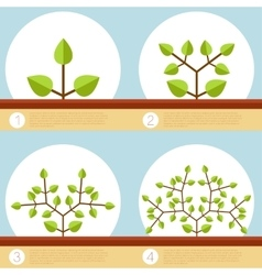Dichotomous branching plants banner vector