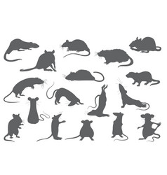 different rats collection rat poses and exercises vector image