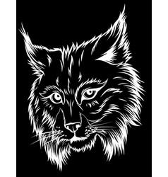 Eurasian lynx isolated vector