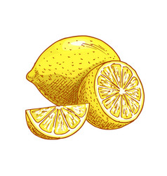 lemon fruits sliced sketch icon vector image