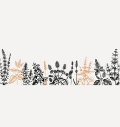 Mints hand drawn medicinal herbs banner design vector