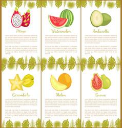 papaya and watermelon ambarella carambola poster vector image