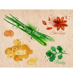 Spices herbs watercolor star anise parsley spring vector image