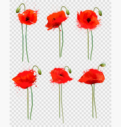 Set a red poppies flowers on transparent vector