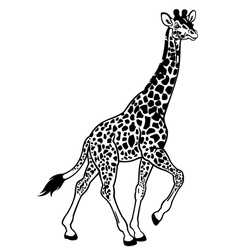 giraffe black white vector image