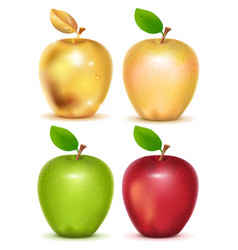 set of red yellow green and gold apple on white vector image