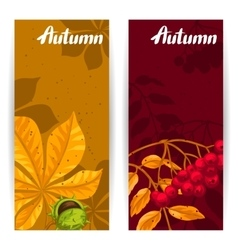 Banners with autumn leaves and plants Design for vector image