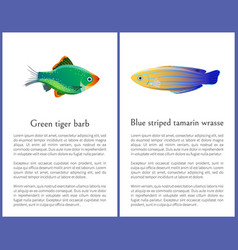 green tiger barb and blue striped tamarin fishes vector image