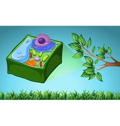 Plant cell and green leaf vector