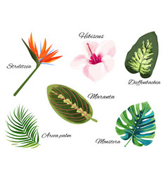 Tropical collection single exotic plants vector