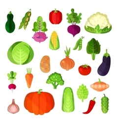 Vegetable summer harvest vegan food collection vector image