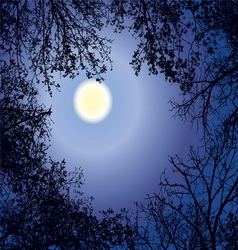 Night forest gainst the night sky in a full moon vector image