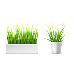 green grass in a rectangular and round pot vector image vector image