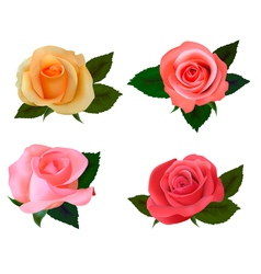 group of a beauty roses vector image