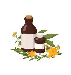 Homeopathy natural medicine healthy organic vector