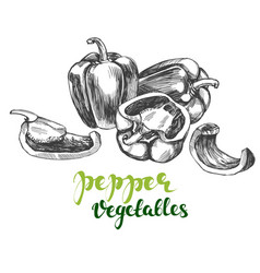 peppers bell vegetable set hand drawn vector image