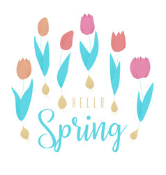 tulip pink vector image