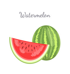 Watermelon citron melon berry ripe tropical fruit vector