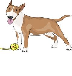 bull terrier b vector image