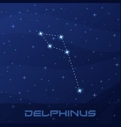 constellation delphinus dolphin night star sky vector image