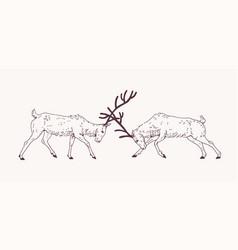 Pair male deers fighting with antlers during vector