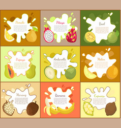 Pomelo and pitaya posters set vector