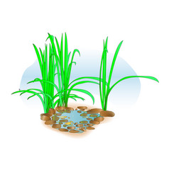 Small lake with grass on the shore for landscape vector