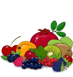 Summer fruits and berries vector