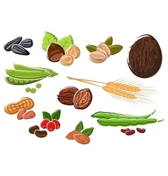 Appetizing nuts beans seeds and wheat vector image