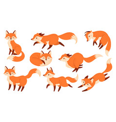 Cartoon red fox funny foxes with black paws cute vector