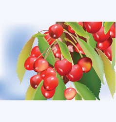 Cherry branch with leaves vector