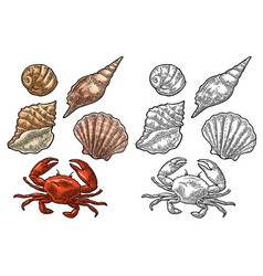 Crab and shell isolated on white background vector