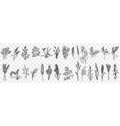fields grass and plants doodle set vector image