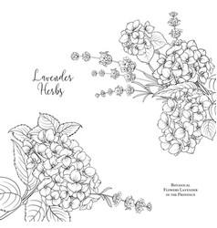 Floral garland hydrangea vector