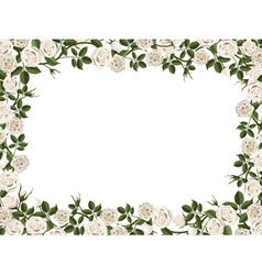 square border of white roses vector image vector image