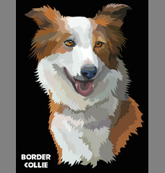 Colorful border collie image vector