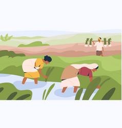 Indian women farmers working on rice field vector