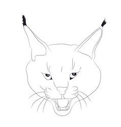 portrait of a lynx drawing lines vector image