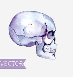 Watercolor flowers and skull background vector image vector image
