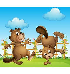 Beavers playing at the garden vector image vector image