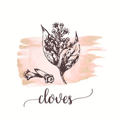 cloves sketch on watercolor paint black vector image