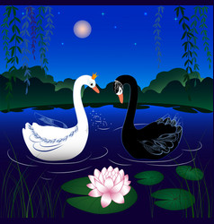 Image of two swans vector