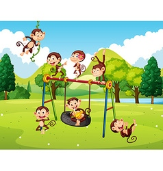 Many monkeys in the park vector image