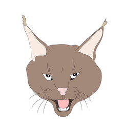 portrait of a lynx drawing vector image