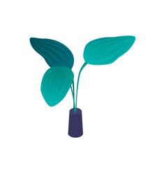Aquarium plant leaves composition vector