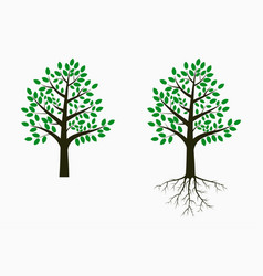 tree with leaf and root vector image