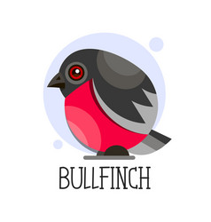 bullfinch on a branch colored vector image